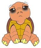De droevige schildpad zit Stock Fotografie