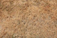 De droge achtergrond van de grastextuur in een zonnige de zomerdag Stock Foto