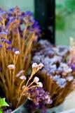 De droge blad en takbloem in vaas of pot in tuin is thuis t Stock Foto