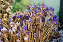 De droge blad en takbloem in vaas of pot in tuin is thuis t Stock Afbeeldingen