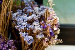 De droge blad en takbloem in vaas of pot in tuin is thuis t Royalty-vrije Stock Afbeelding