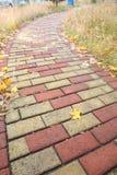 De droge bladeren van de herfst Stock Fotografie