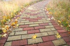 De droge bladeren van de herfst Stock Foto's
