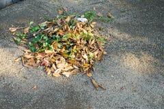 De droge bladeren werden samen geveegd stock afbeelding