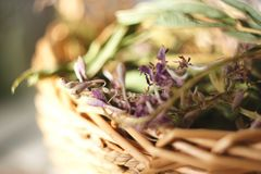 De droge bloemen en de bladeren van wilgeroosje liggen in een rieten mand royalty-vrije stock foto's
