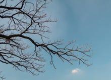 De droge boom en de hemel Stock Afbeeldingen