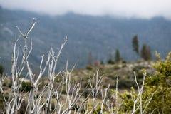 De droge boom vertakt zich op regenachtige dag in berg royalty-vrije stock fotografie