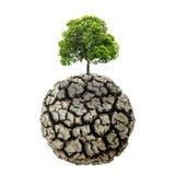 De droge en gebarsten grond van het droogteland in dor seizoen, dode boom op Dr. Royalty-vrije Stock Afbeeldingen