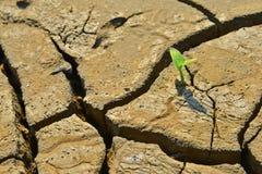 De droge gebarsten land Groene spruit, sluit omhoog, het nieuwe leven, nieuwe hoop, heelt de wereld Stock Foto's