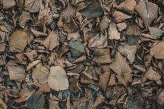 De droge, gevallen bladeren liggen op de grond in de herfst Stock Foto