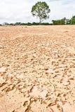 De droge grond in dor seizoen, heeft boomachtergrond uit nadruk stock foto