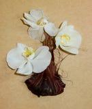 De droge huid van de irisui en witte orchideebloemen Royalty-vrije Stock Foto's