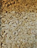 de droge pompoenen van gezien in fulvous shell zijn vitamine-rijk, een ontbijt, regetarianets, royalty-vrije illustratie