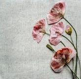De droge rode papaverbloemen kijkt als borduurwerk op linnenachtergrond Stock Afbeeldingen