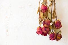 De droge rode ruimte van het het kader lege exemplaar van rozenbloemen   Stock Foto