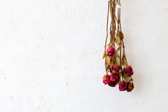 De droge rode ruimte van het het kader lege exemplaar van rozenbloemen op witte muur Royalty-vrije Stock Fotografie