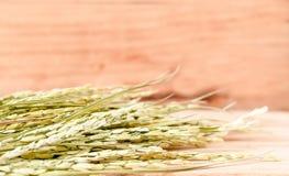 de droge ruwe rijst of de oren van rijst op houten lijstachtergrond S royalty-vrije stock foto's