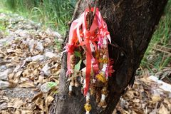 De droge slinger van de goudsbloembloem in het Thaise stijl hangen op boom stock foto's