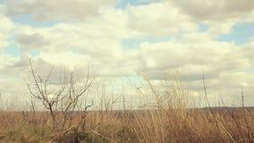 De droge slingeringen van het graslandschap in de aard van de windbeweging stock footage