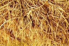 De droge strotextuur als achtergrond, balen van graangewassenstro voor koe en paard, vat natuurlijk patroon voor ontwerp samen stock fotografie