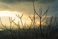 De droge takken van bomen, zonstralen maken hun manier door de donkere wolken Concept: heropleving Stock Foto's