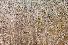 De droge textuur van de stroclose-up De landbouwachtergrond Royalty-vrije Stock Afbeeldingen
