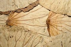 De droge textuur van lotusbloembladeren stock afbeelding