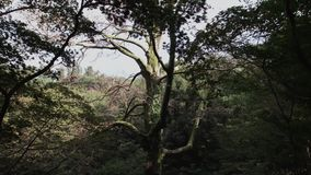 De droge vertakte boom kweekt onderaan een heuvel in regenwoud Vele verschillende installaties in de botanische tuin stock videobeelden
