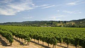 De droge Wijngaard van de Kreek Stock Afbeeldingen
