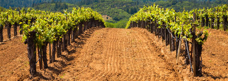 De droge Wijngaarden van de Vallei van de Kreek Stock Foto's