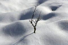 De droge woestijn van de sneeuwduinen van de tak eenzame boom Royalty-vrije Stock Foto's