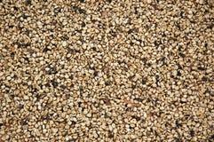 De drogende Bonen van de Koffie Royalty-vrije Stock Afbeeldingen