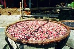 De Drogende Bonen van Himalayagebergte, Nepal Stock Foto's