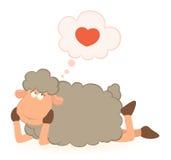 De dromen van schapen over liefde Stock Foto