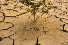 De droogte, het globale verwarmen, milieu verandert plotseling Stock Foto's