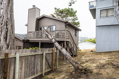 De droogte veroorzaakt de dode boom van de pottenpijnboom om op huis te vallen stock afbeelding