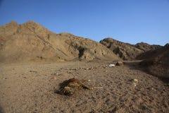 De droogtestenen van de doodswoestijn Stock Fotografie