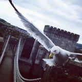 de droom van de vogel Stock Foto