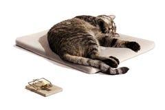 De droomnadruk van de kat op kat Stock Foto