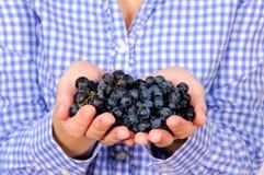 De druiven van Blak Royalty-vrije Stock Foto