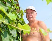 De druiven van de besnijdenis Royalty-vrije Stock Fotografie
