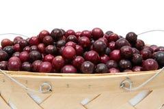 De Druiven van de muscateldruif Stock Foto