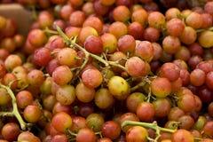 De druiven van de muscateldruif Stock Fotografie