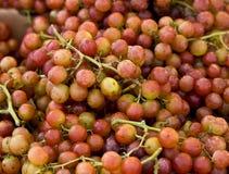 De druiven van de muscateldruif Stock Foto's