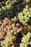 De druivendruif van de druif royalty-vrije stock afbeeldingen