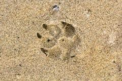 De druk van de hondvoet in het zand in de zomer Royalty-vrije Stock Afbeeldingen