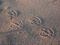 De drukken van de meeuwvoet in zand Stock Foto