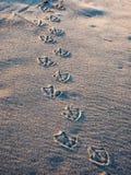 De drukken van de meeuwvoet in zand Royalty-vrije Stock Fotografie