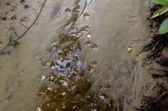 De drukken van de wasbeervoet in de modder Stock Afbeeldingen