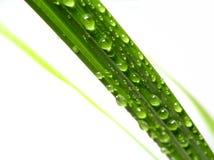 De druppel van het water op palmblad Royalty-vrije Stock Foto